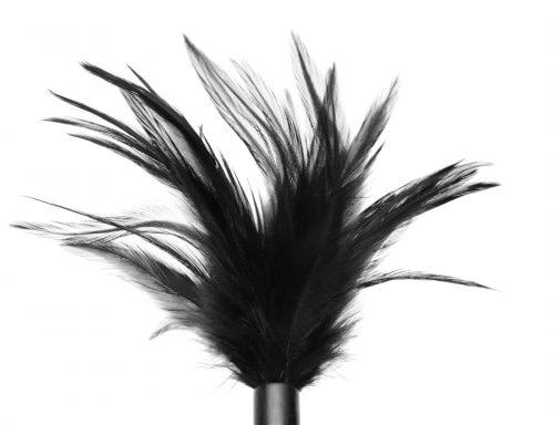 Black Feather Tickler Close Up